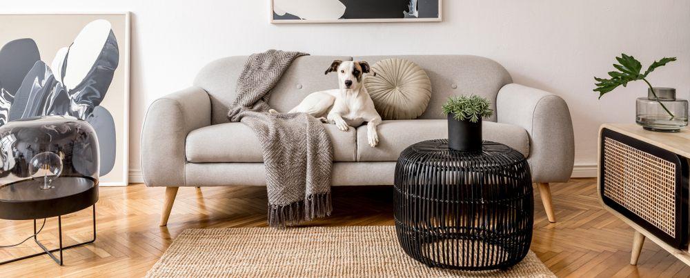 Beautiful dog lying on the modern gray sofa.
